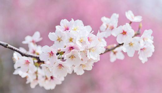【フリーBGM・明るい】春だ!!新生活だ!!/新しい物語が始まるようなピアノ曲