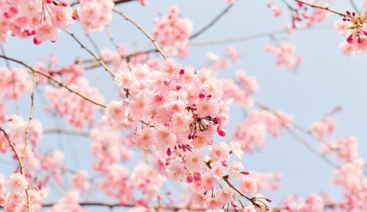 【フリーBGM】春の桜の切なさは/春の桜が散るようなピアノ曲