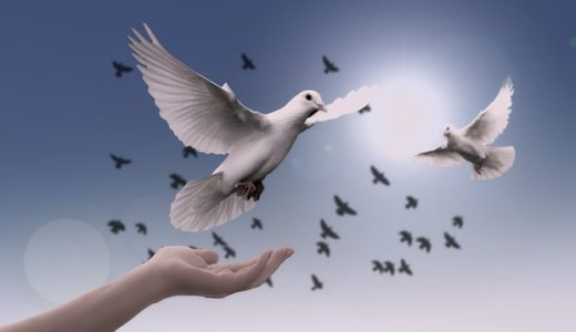 【フリーBGM】ハトに餌をあげるおじいさん/優しい雰囲気のある曲
