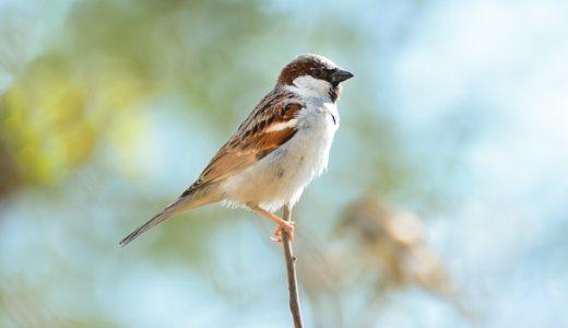 【フリーBGM】朝の電線に止まる数匹の鳥/小鳥たちの鳴き声を感じる曲