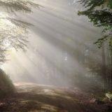 【フリーBGM】朝の水面に反射する太陽の光/少し眩しい光がさすような曲