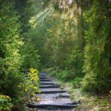 【フリーBGM】森へ帰る動物達/自然のある妖精のような曲