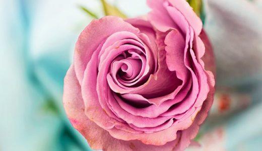 【フリーBGM】建物の角に咲く花/美しい花が立派に咲いているようなピアノ曲