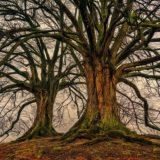 【フリーBGM】大きな木が立派に立つ/勇敢なピアノソロ