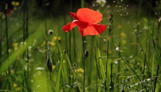 【フリーBGM】夏に咲く緑の花々/優しく響く切ないピアノ曲