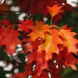 【フリーBGM】秋の訪れ/シリアスな雰囲気のある