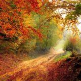 【フリーBGM】秋の紅葉とともに/落ち着いた雰囲気のあるピッコロ楽曲