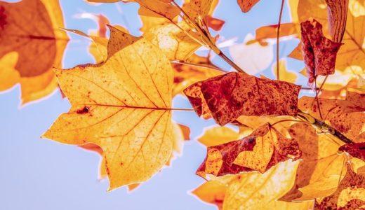 【フリーBGM】季節が終わりを告げまた始まる/どこか切なく懐かしい