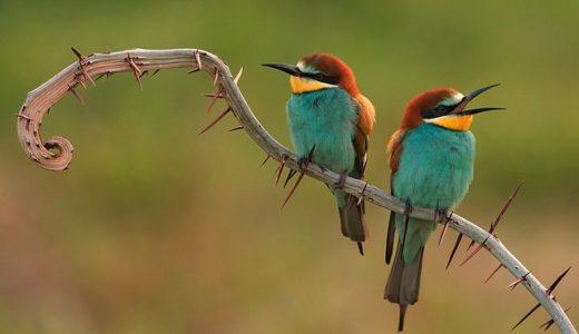 【フリーBGM】木に止まる野生の鳥/穏やかなオーケストラ