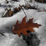 【フリーBGM】枯葉を踏む人々と冬の冷たい風/冷たさのある
