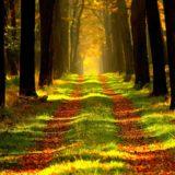 【フリーBGM】雑草が生えていた道路が伐採され/ゆったりとしたオーケストラ