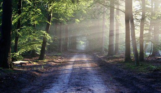 【フリーBGM】「自然曲」第四番-いつも歩いてる道にこんな世界があっただなんて/静かな自然を歩くような