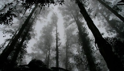 【フリーBGM】怖い夢を見た/不気味なホラー曲
