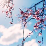 【フリーBGM】春よ、別れよ、旅立ちよ/切ないピアノ曲