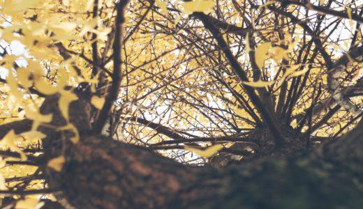 【フリーBGM】「自然曲」第二番-小鳥達が落とす銀杏/明るく可愛げのある