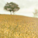 【フリーBGM】「自然曲」第一番-動物達よおはよう/自然のあるゆったりとした曲