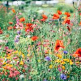 【フリーBGM】雑草だらけの道に綺麗な花が咲いていた/ほんわかとした優しさのある