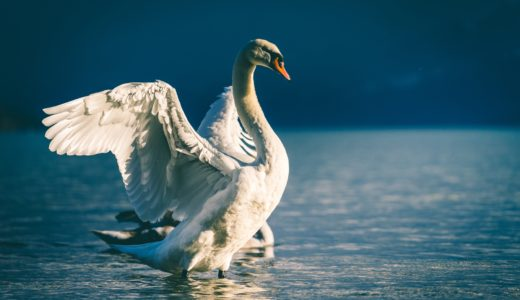 【フリーBGM】青空を飛ぶ一匹の白鳥/空を飛ぶような壮大なオーケストラ