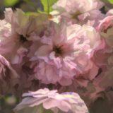 【フリーBGM・ボーカル】春の空へ告げる/卒業・別れ・春を感じる歌もの楽曲